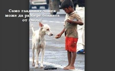 Хранейки бездомно животно, храниш душата си