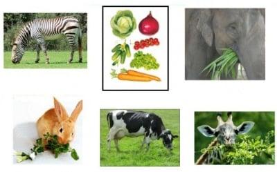 Храносмилане при животните - общо