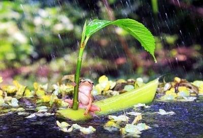С лодка под дъжда
