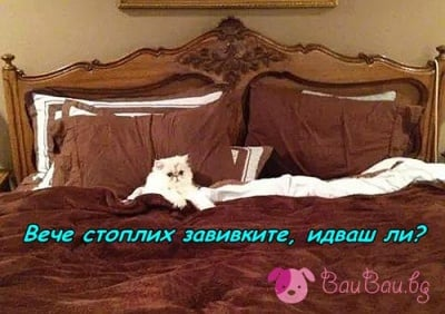 Имате котка? Не ви трябва електрическо одеяло!