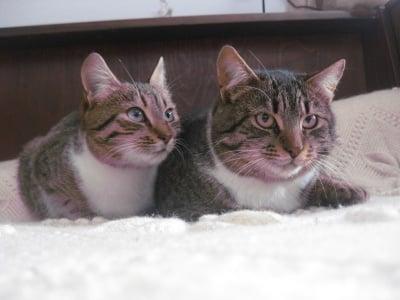Джес и Писи