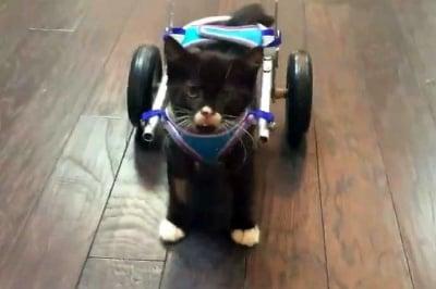 Инвалидна количка за котенце
