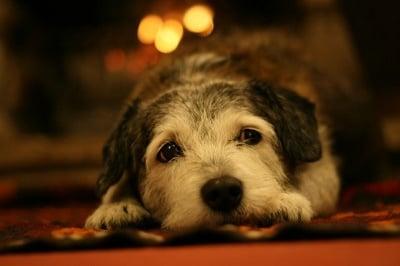 Искам да осиновя куче