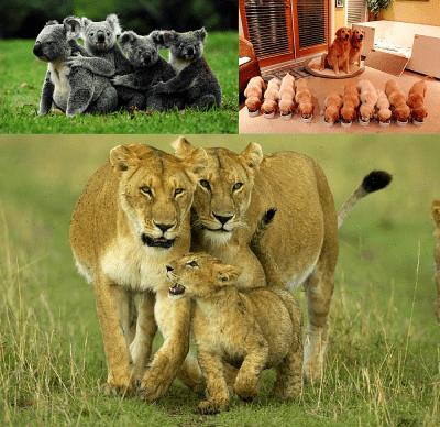Семейство - топлина и уют