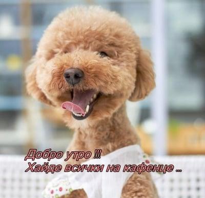 Да започнеш седмицата с усмивка