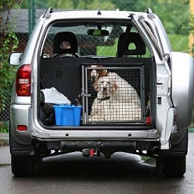 Как да науча кучето да стои в клетка