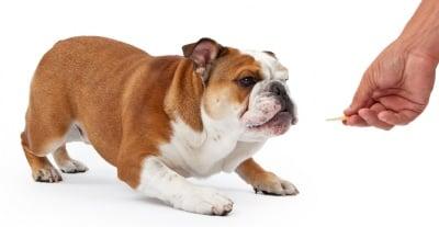 """Обучение на кучето: Урок №9. Научете кучето на командата """"ЛЕГНИ"""""""