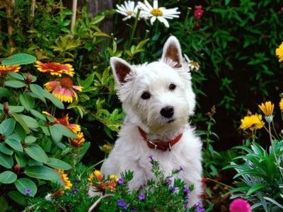 Обучение на кучето: Урок №2. Научете кучето да разпознава  своето име