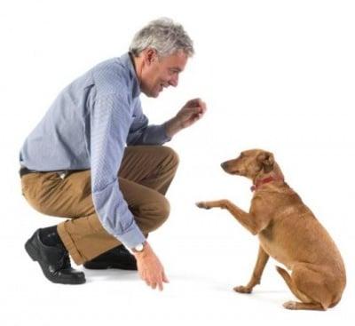 Обучение на кучето: Урок №17. Научете кучето да се примолва