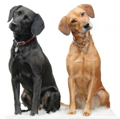 """Обучение на кучето: Урок №13. Научете кучето на командата """"СТАНИ"""""""