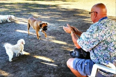 Как да общуваме със сляпо куче