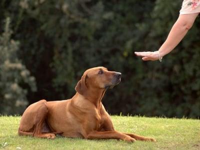 """Обучение на кучето: Урок №14. Научете кучето на командата """"СТОЙ НА МЯСТО"""""""