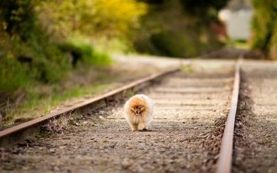 Как да предпазим кучето от бягство