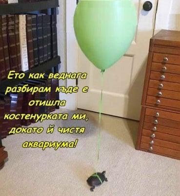 Как да проследим костенурка?