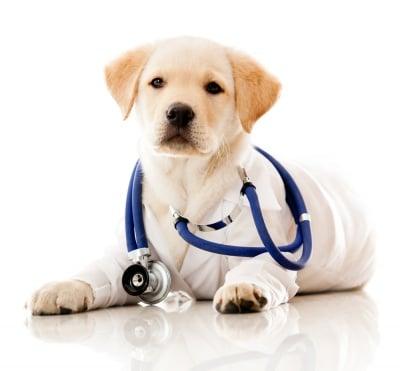 Как се изследва болното куче?