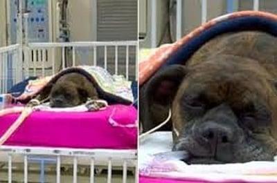 Кармен куче спасява стопанина си