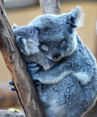 Най - топло е в прегръдките на мама