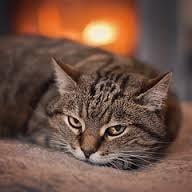 Кога се налага евтаназия на котката