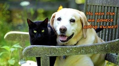 Кой каза, че черните котки носят нещастие?