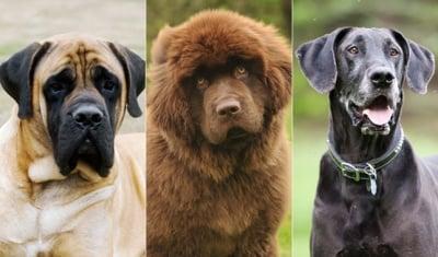 Кои кучета трябва да приемат калций