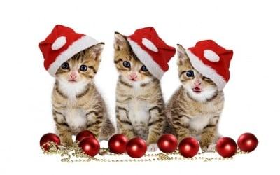 """Готови сме за Коледа-а-а-а"""