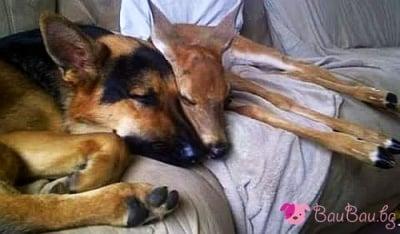 """""""Колко е хубаво да спим заедно!"""""""