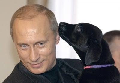 Кони - подарено кученце на Путин