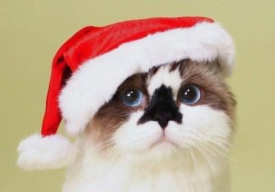Коте с коледна шапка