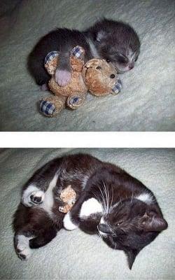 Коте с мече преди и след