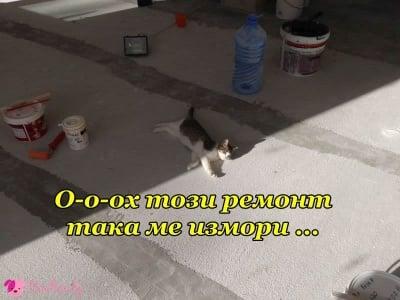 Котешки ремонт