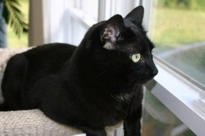 Котка гледа през прозореца