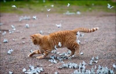 """""""Бели пеперудки, къде отлетяхте ..."""""""