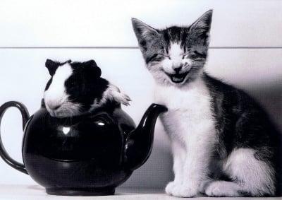 """""""Да те черпя едно чайче"""""""