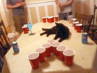 котка лежи на масата
