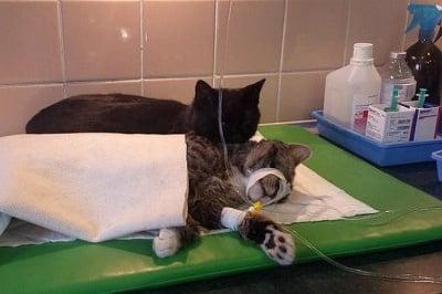 Котка мед сестра