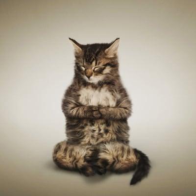 Кой каза, че котките не практикуват йога ...