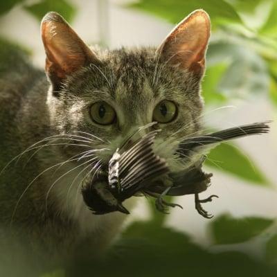 Котка убива птица