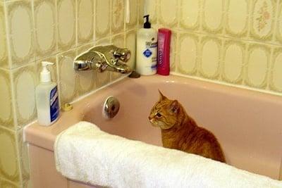 Котка в банята