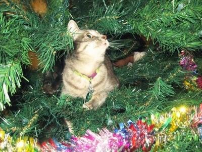 Котка в елха