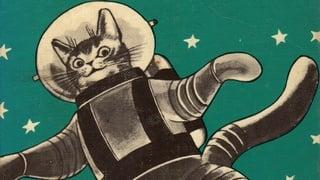 Изпращат котка в космоса