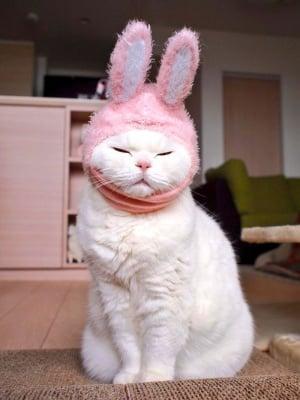 Котката Ура