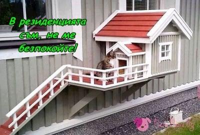 Котките са истински ценители на комфорта