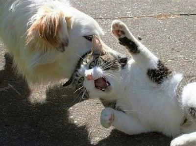"""Пусни ме бе"""