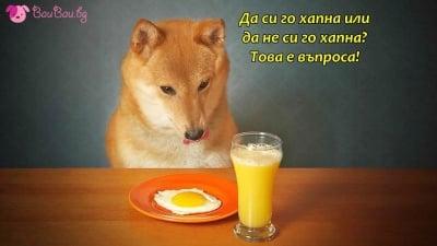Кучешка дилема