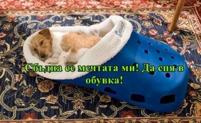 """""""Имам си една мечта...да спя в обувка през нощта"""""""