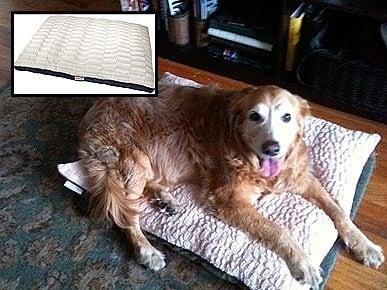 Куче в легло