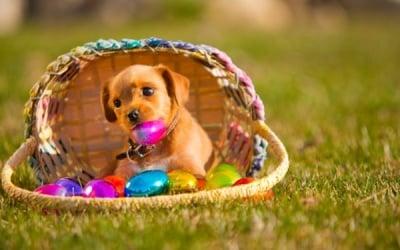 """""""Готов съм за Великден"""""""