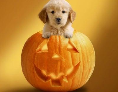 Готов съм! Нека Хелоуин започне сега-а-а-а!