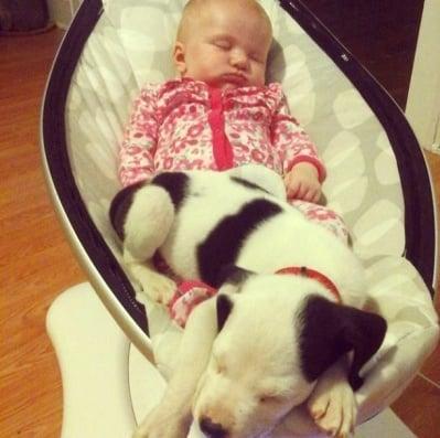Кученце и питбул са най-сладките най-добри приятели