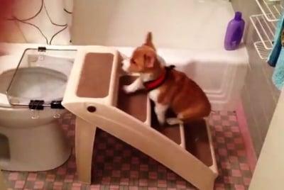 Кученце ползва тоалетната нa стопаните си съвсем само